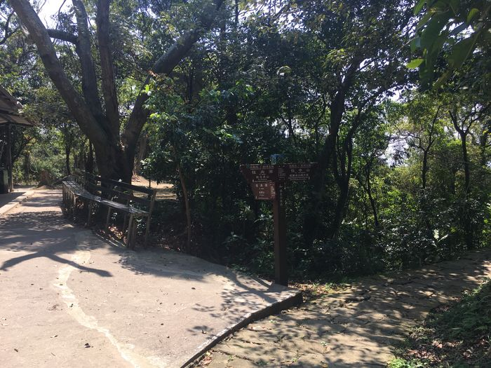 往圓覺寺步道岔路