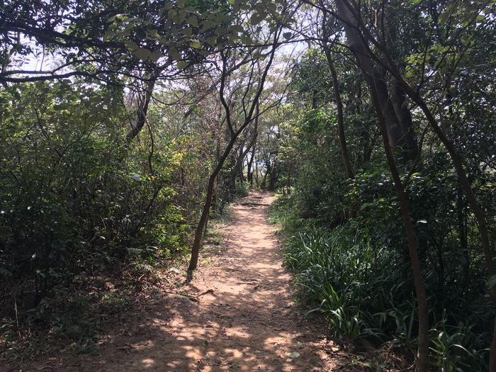 文間山步道