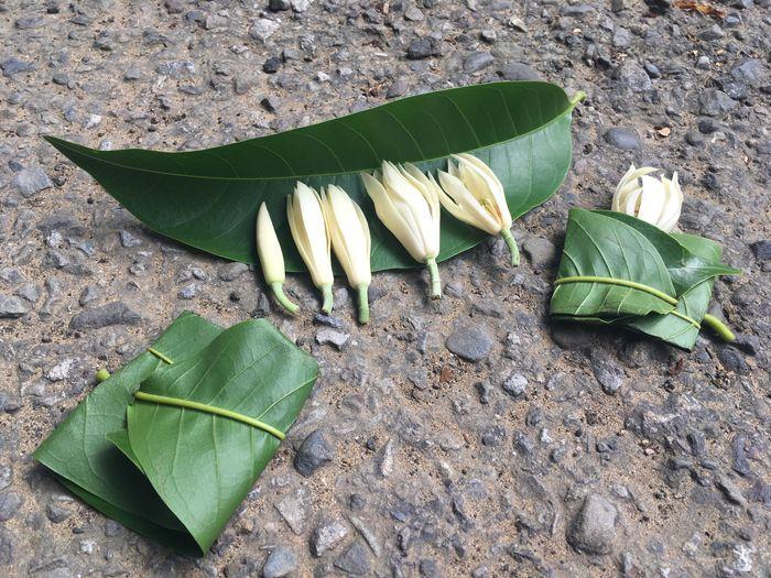 新竹秘境春記玉蘭花園